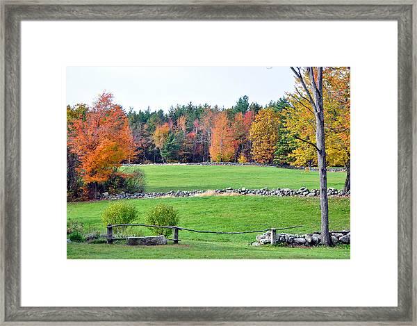 Fall Foliage 6 Framed Print