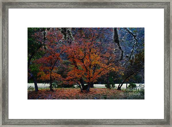 Fall Foliage At Lost Maples State Park  Framed Print