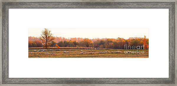Fall Graze Framed Print