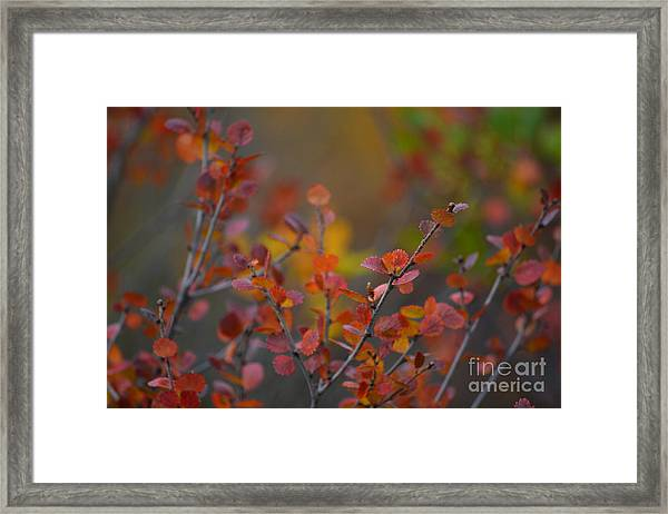 Framed Print featuring the photograph Fall In Alaska by Kate Avery