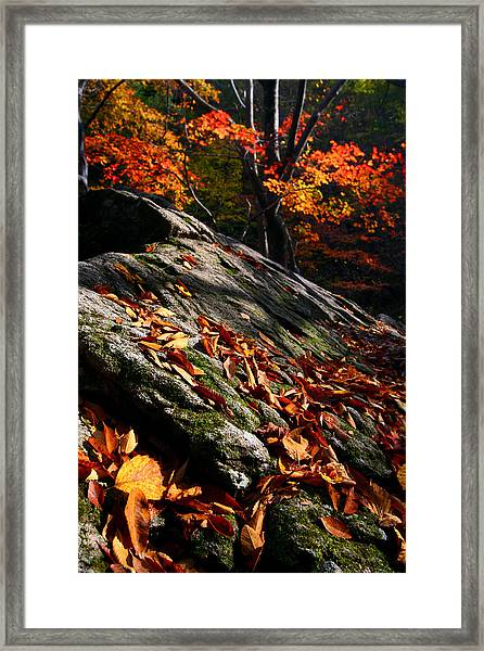 Fall In Gyeryongsan Framed Print