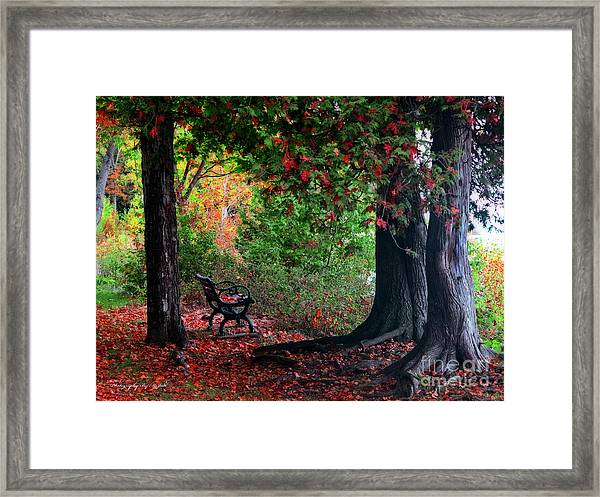Fall In Henes Park Framed Print