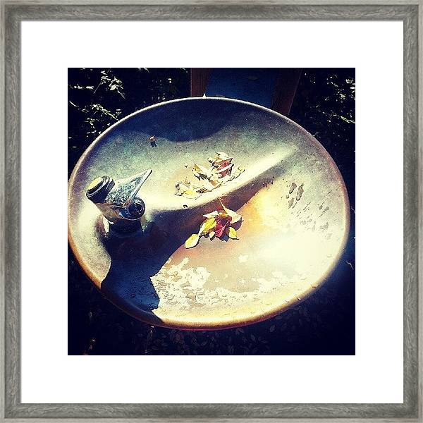 Fall Leaves In The Drinking Fountain Framed Print