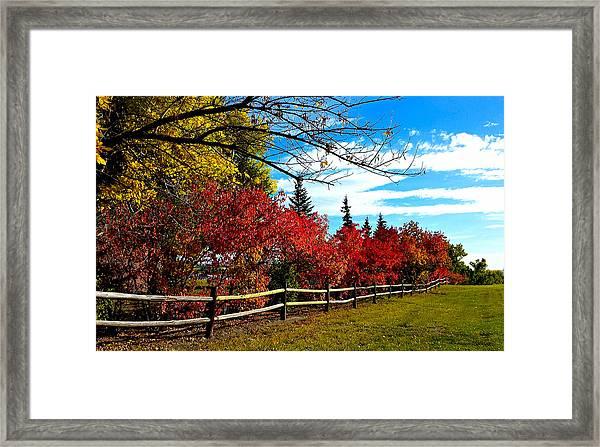 Fall Lineup Framed Print