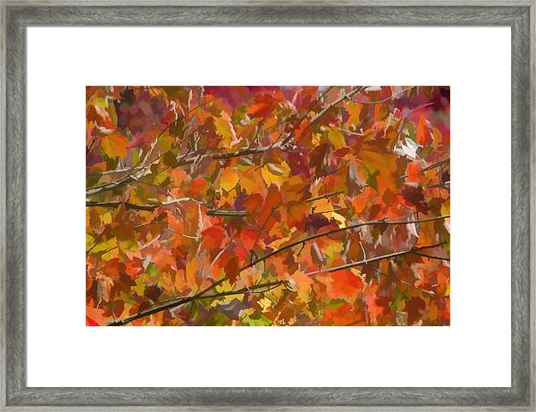 Framed Print featuring the photograph Fall Maple Colors by Beth Sawickie