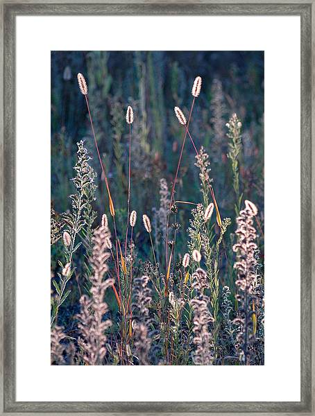 Fall Meadow Backlit Framed Print