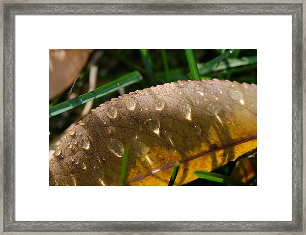 Fall Morning Leaf And Dew Framed Print