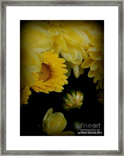 Fall Mums Growing At Blue Horse Rescue Framed Print