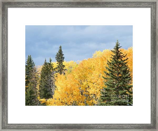Fall Near Ya Ha Tinda Framed Print