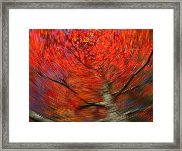 Fall Tree Carousel Framed Print