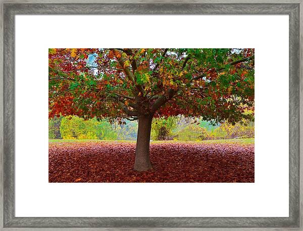 Fall Tree View Framed Print