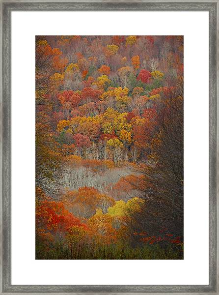 Fall Tunnel Framed Print
