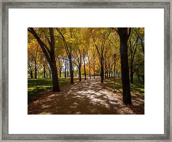 Fall Walk Framed Print