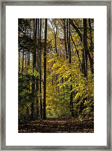 Fall Walk In The Woods Framed Print