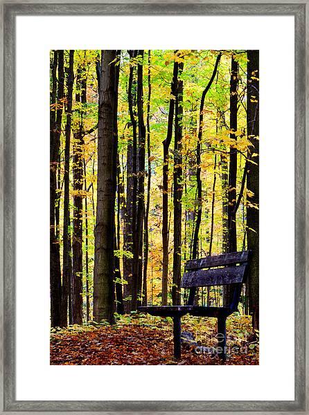 Fall Woods In Michigan Framed Print