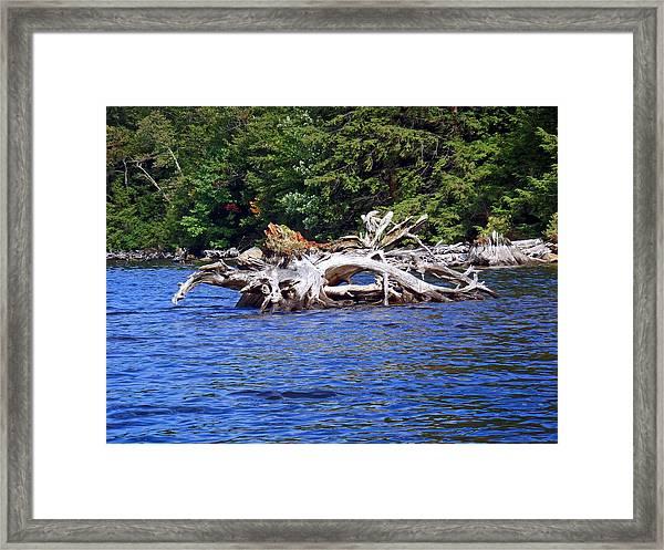 Fallen Tree In A Lake Framed Print