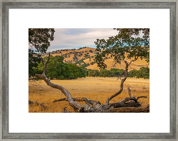 Fallen Tree With A View Framed Print