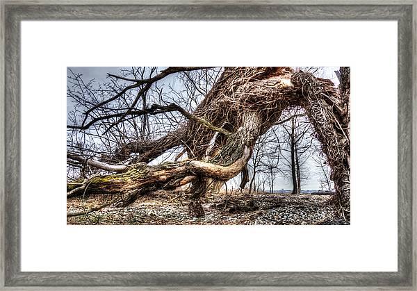 Fallen Twisted Giant Framed Print