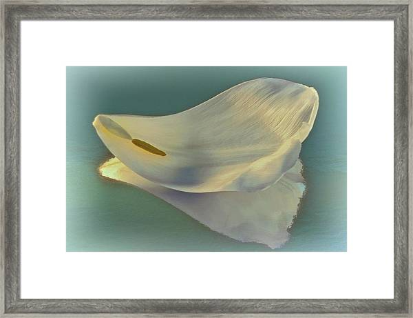 Fallen White Petal On Aqua Framed Print