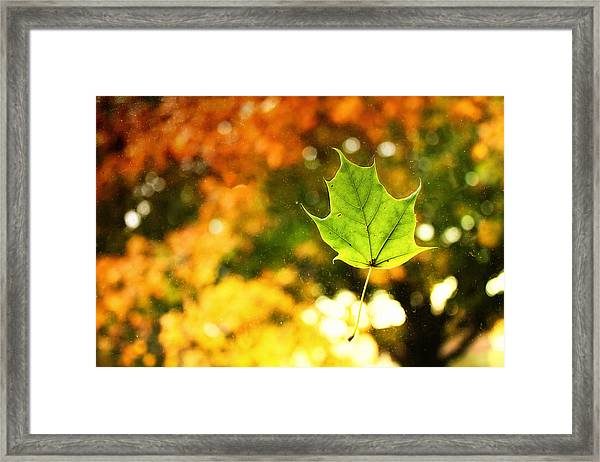Falling Leaf Framed Print