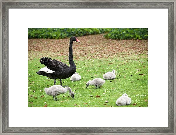 Family Of Six Framed Print