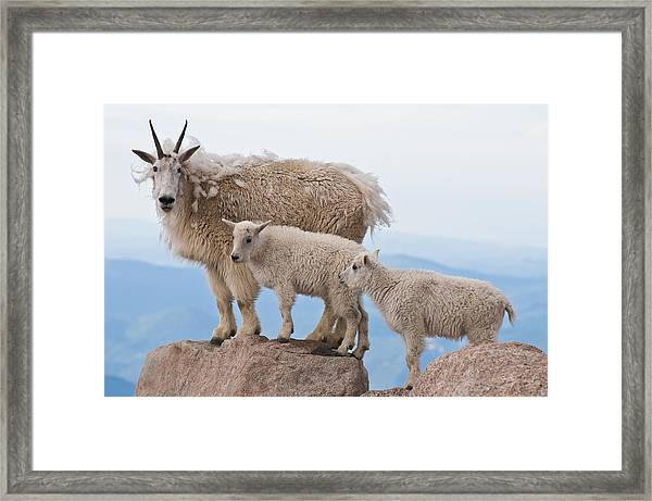 Family Photo Time Framed Print by Mike Berenson