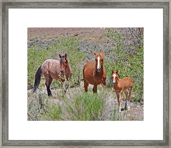 Family Trio Framed Print
