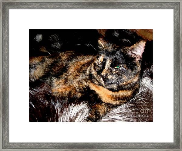 Fancy Cat Framed Print