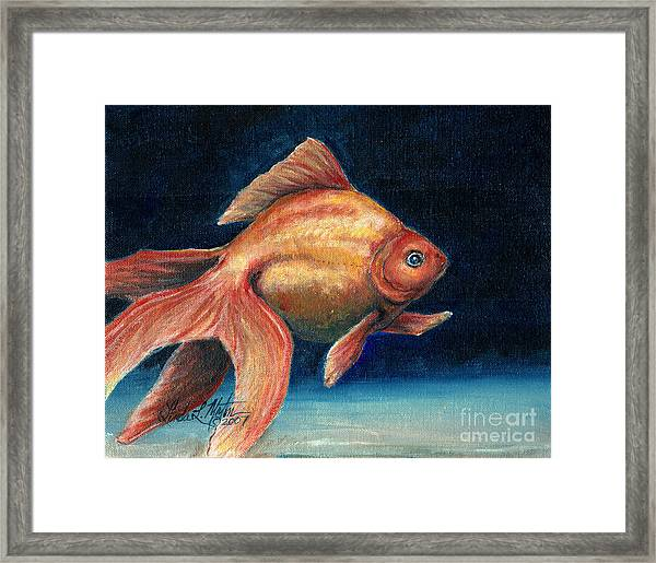 Fancy Goldfish Framed Print