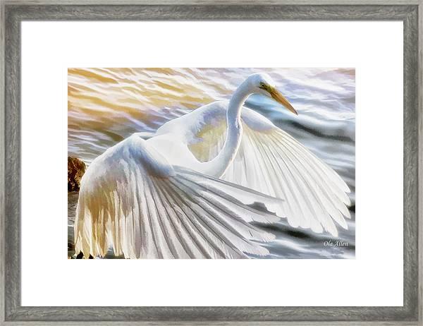 Fancy Wing Dancer  Framed Print