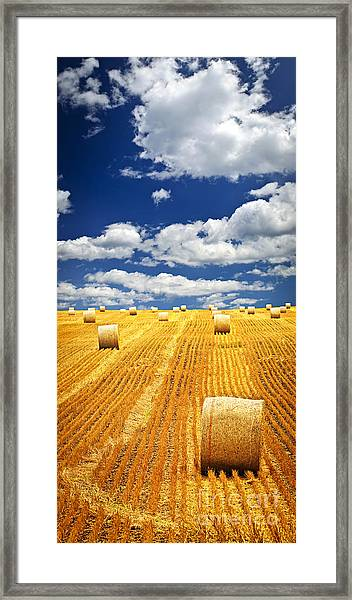 Farm Field With Hay Bales In Saskatchewan Framed Print