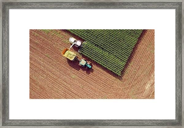 Farm Machines Harvesting Corn For Feed Or Ethanol Framed Print by JamesBrey