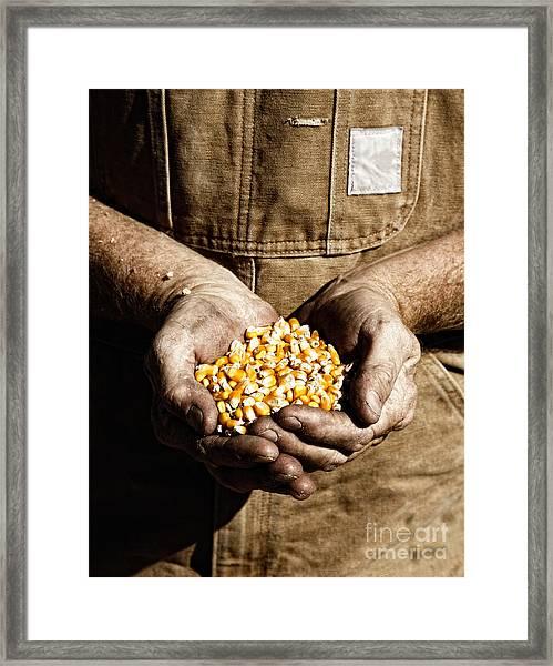 Farmer's Hands With Seed Corn Framed Print