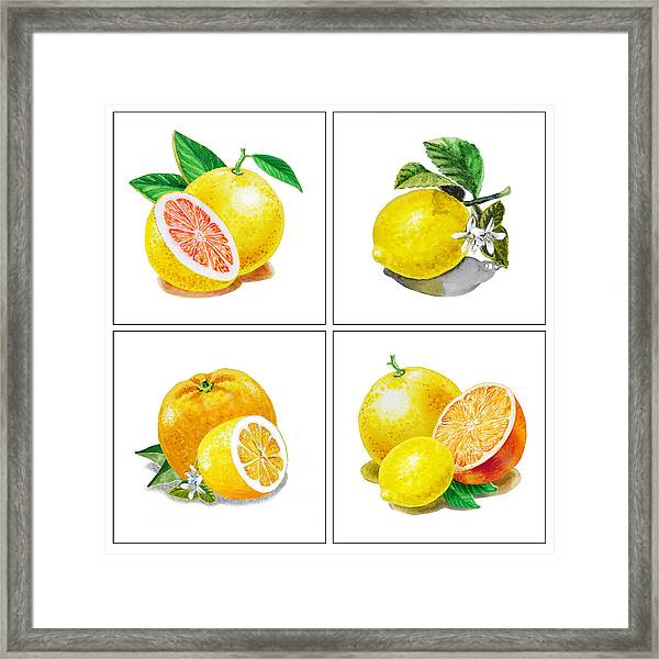 Farmers Market Gifts Vitamin C Framed Print