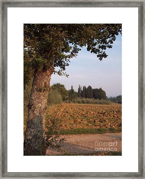 farming in Tuscany Framed Print