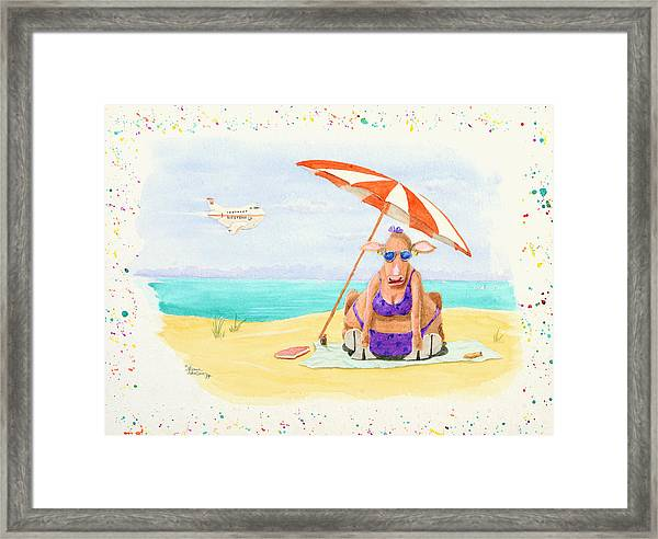 Fat Cow On A Beach 1 Framed Print