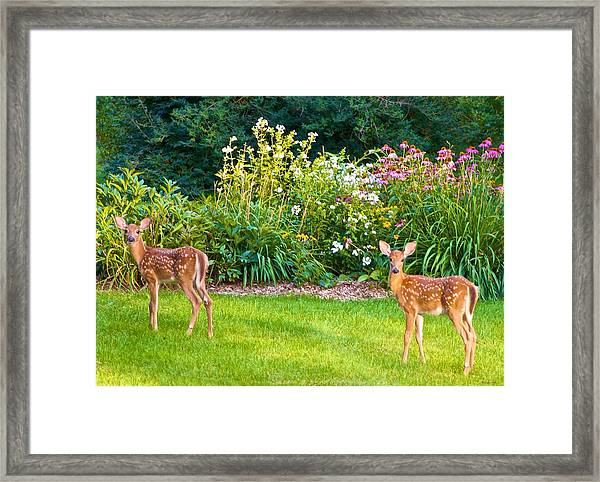 Fawns In The Afternoon Sun Framed Print