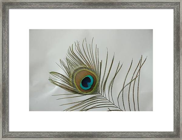 Framed Print featuring the photograph Feather by David Armstrong