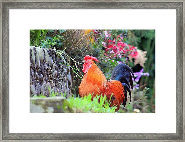 feathered alarm II Framed Print