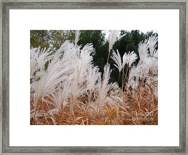 Feathered Fall Framed Print
