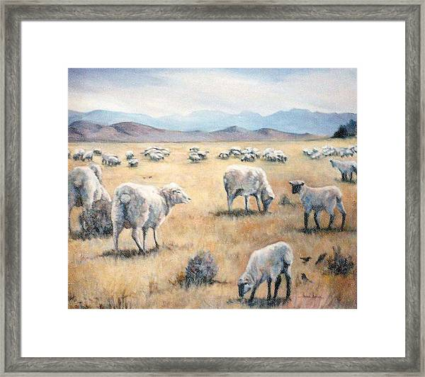 Feed My Sheep Framed Print