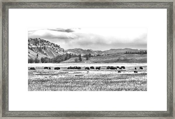 Feeding Bison And Scenic View  Framed Print