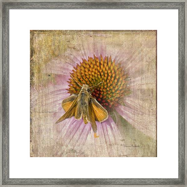 Feeding Moth Framed Print