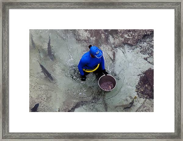 Feeding The Sharks Framed Print