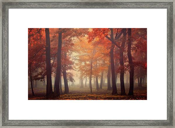 Feel Framed Print by Ildiko Neer