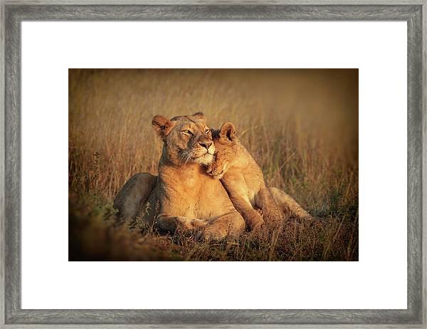 Feline Family Framed Print