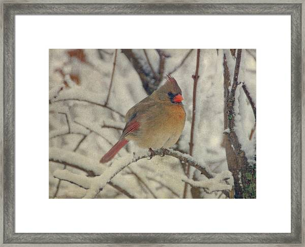 Female Cardinal In The Snow II Framed Print
