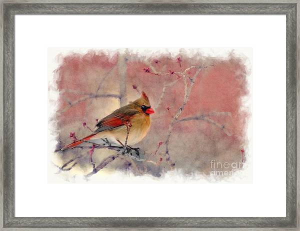 Female Cardinal Portrait Framed Print
