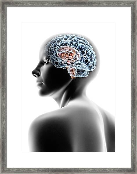 Female Human Head With Brain Framed Print