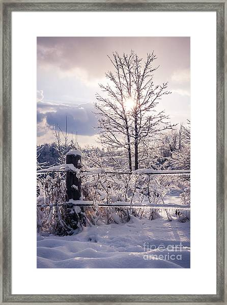 Fence And Tree Frozen In Ice Framed Print